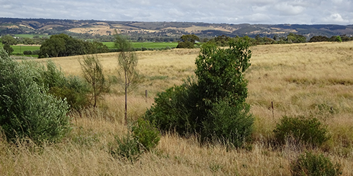 Branson Road Revegetation, Lot 50_Malone