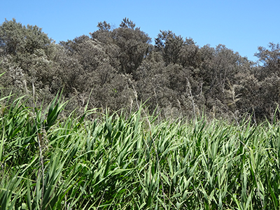 Califronia Road Wetlands_Malone