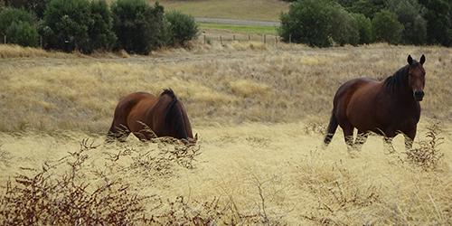 Horses, Lot 50_Malone