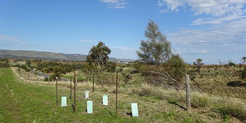 Initial Plantings VHR 2015_Malone