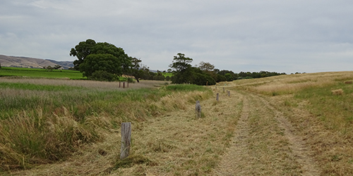 Old fence line, Lot 50_Malone