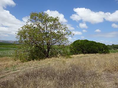 Trees 1, Lot 50_Malone