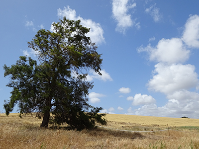Trees 2, Lot 50_Malone