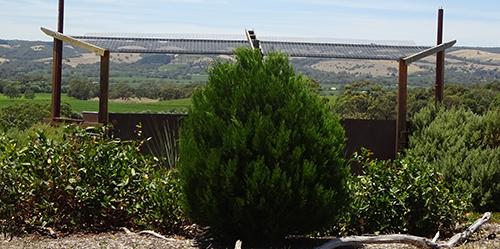 Native Pine, L50K_Malone